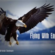 Eagle, Sarah Myers-Mitchell, Morris D'Angelo, CPA, Accountant, Financial Services