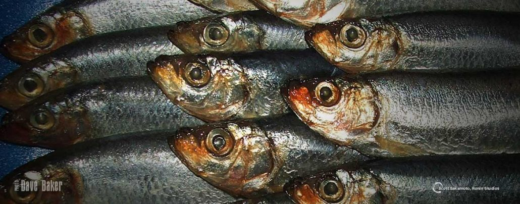 Fish, Protein, Sardines, Omega 3