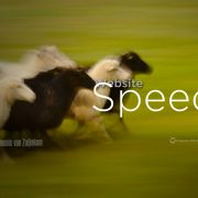 Website Speed, Conversions, Calls to Action, Website Optimization