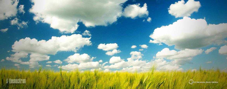 Blue Sky, Sakamoto Style, Scott Sakamoto